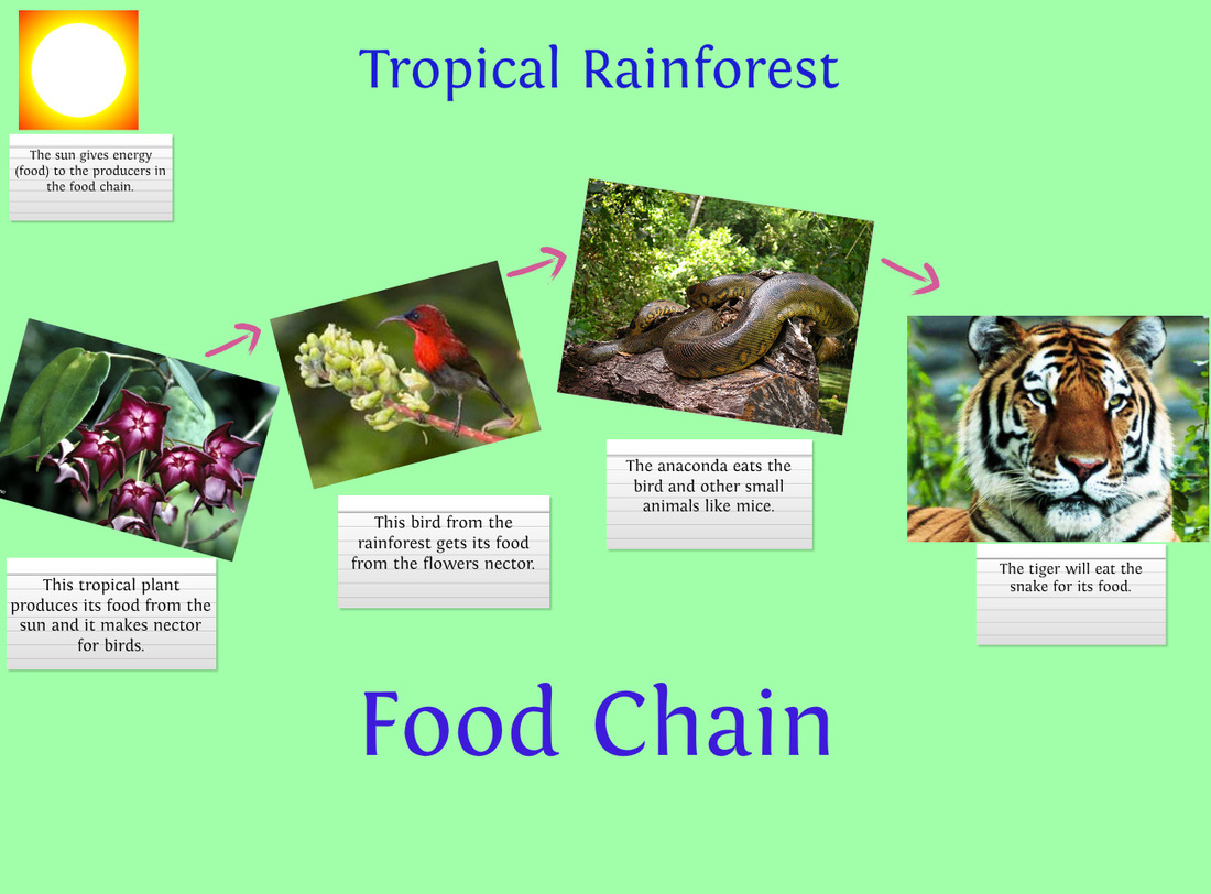 food chain tropical rainforest Car Pictures